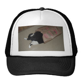 Thistle the Cat Trucker Hat
