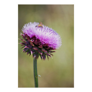 thistle with bee poster