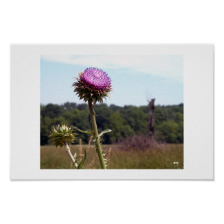 Thistle with farm backdrop poster