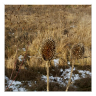 thistles in January Poster