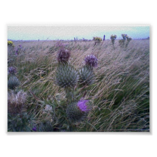 Thistles Poster
