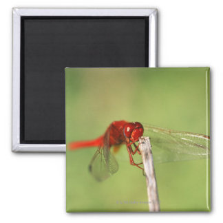Thomas Baines Nature Reserve, Eastern Cape 2 Inch Square Magnet