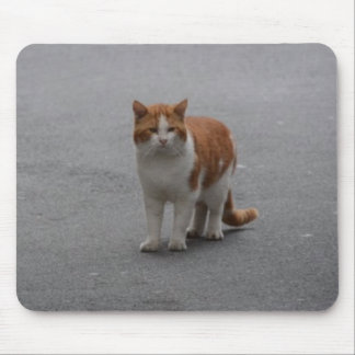Thomas Ginger And White Cat Mouse Pad