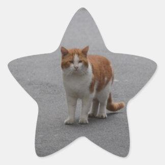 Thomas Ginger And White Cat Star Sticker