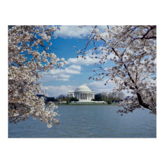 Thomas Jefferson Memorial with Cherry Blossoms Postcard
