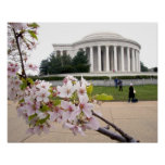 Thomas Jefferson Memorial with cherry blossoms Poster