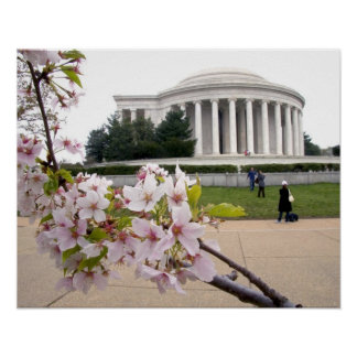 Thomas Jefferson Memorial with cherry blossoms Posters