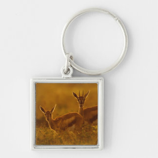 Thompson's Gazelle (Gazella Thomsonii) Mother Silver-Colored Square Keychain