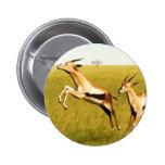 Thomson's Gazelle Pinback Buttons