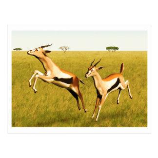 Thomson's Gazelle Postcard