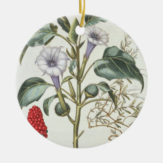 Thorn Apple, from the 'Hortus Eystettensis' by Bas Double-Sided Ceramic Round Christmas Ornament