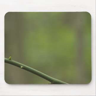 thorns-2012-04-28 tapetes de raton