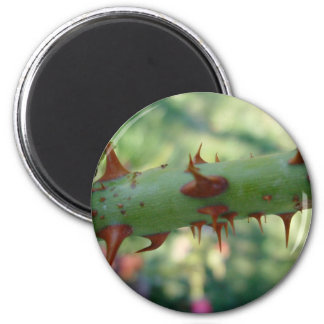 Thorns Magnet