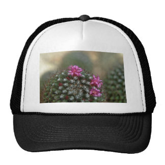 Thorny Colors Trucker Hats