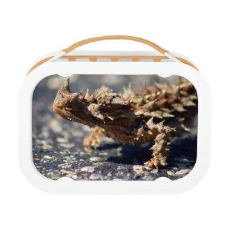 Thorny Devil Lizard, Outback Australia, Photo Lunch Box