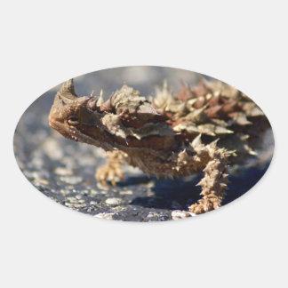 Thorny Devil Lizard, Outback Australia, Photo Oval Sticker