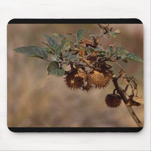 Thorny Seed Pod Mouse Pad