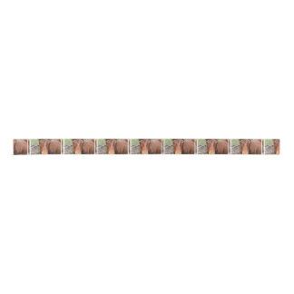 thoroughbred-24 satin ribbon