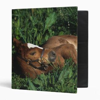 Thoroughbred Foal Lying Down 3 Ring Binder
