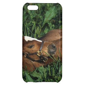 Thoroughbred Foal Lying Down iPhone 5C Covers