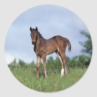 Thoroughbred Foal Standing in the Grass Classic Round Sticker