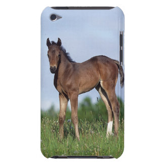 Thoroughbred Foal Standing in the Grass iPod Touch Cover