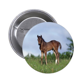 Thoroughbred Foal Standing in the Grass Pinback Button