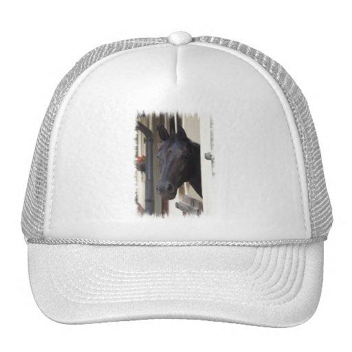 Thoroughbred Friesian Cross Baseball hat