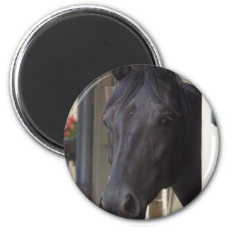 Thoroughbred Friesian Cross Magnet Refrigerator Magnets