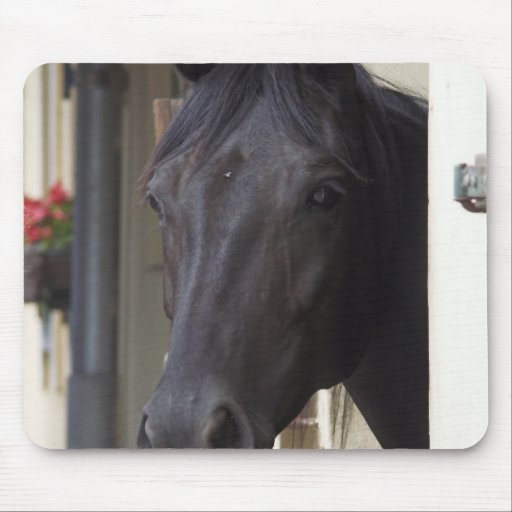 Thoroughbred Friesian Cross Mouse Pad