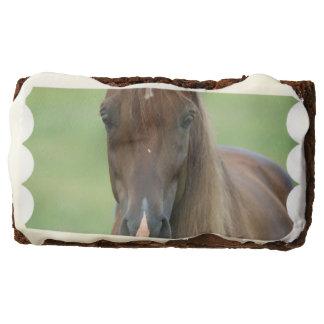 Thoroughbred Horse Brownie