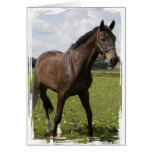 Thoroughbred Horse Card