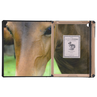 Thoroughbred Horse Cases For iPad