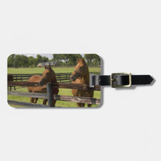 Thoroughbred horse farm in Marion County, Bag Tag
