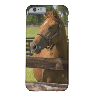 Thoroughbred horse farm in Marion County, Barely There iPhone 6 Case