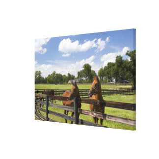 Thoroughbred horse farm in Marion County, Canvas Print