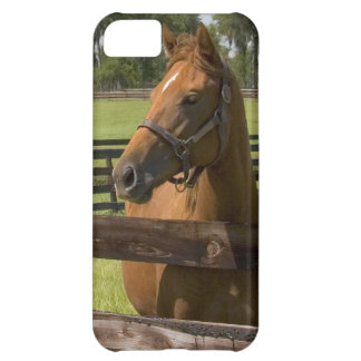 Thoroughbred horse farm in Marion County, iPhone 5C Cover