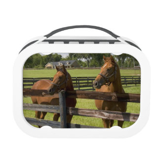 Thoroughbred horse farm in Marion County, Yubo Lunch Box