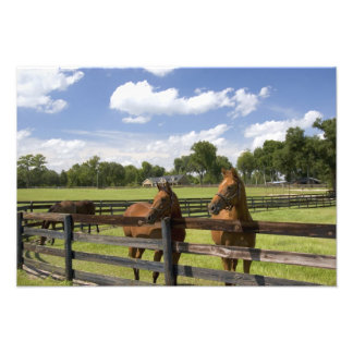 Thoroughbred horse farm in Marion County, Photo Print