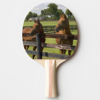Thoroughbred horse farm in Marion County, Ping Pong Paddle
