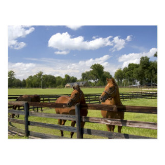 Thoroughbred horse farm in Marion County, Postcard