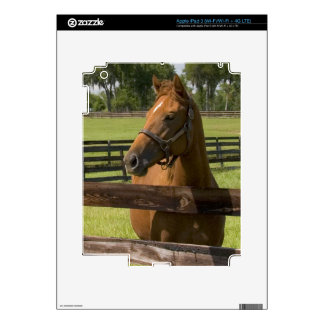 Thoroughbred horse farm in Marion County, Skin For iPad 3
