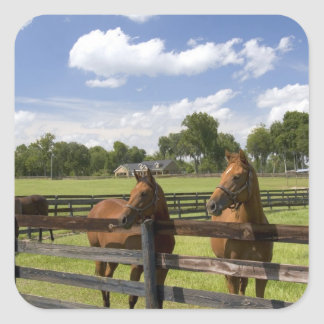 Thoroughbred horse farm in Marion County, Square Sticker
