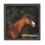 Thoroughbred Horse Headshot Jewelry Box