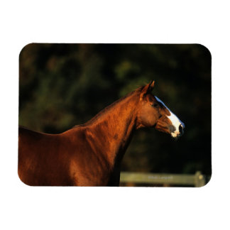Thoroughbred Horse Headshot Magnet