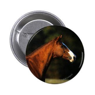 Thoroughbred Horse Headshot Pinback Button