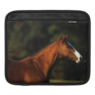 Thoroughbred Horse Headshot Sleeve For iPads
