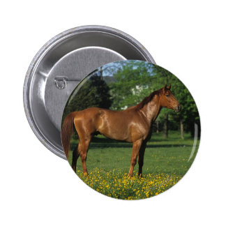 Thoroughbred Horse in Flowers Button