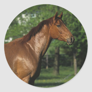Thoroughbred Horse in Flowers Classic Round Sticker