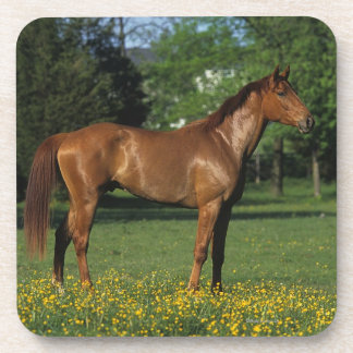 Thoroughbred Horse in Flowers Coaster